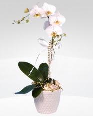 1 dallı orkide saksı çiçeği  Denizli online çiçek gönderme sipariş