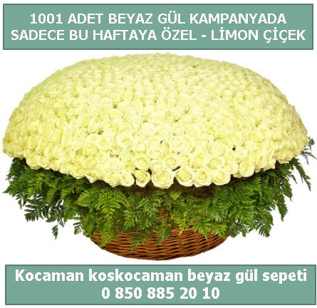 1001 adet beyaz gül sepeti özel kampanyada  Denizli uluslararası çiçek gönderme