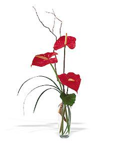 Denizli yurtiçi ve yurtdışı çiçek siparişi  cam yada mika Vazoda 3 adet  antoryum