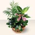 Denizli çiçek online çiçek siparişi  5 adet canli çiçek sepette
