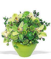 cam yada mika vazoda 5 adet orkide   Denizli online çiçek gönderme sipariş