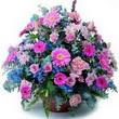 karisik mevsim kir çiçekleri  Denizli uluslararası çiçek gönderme