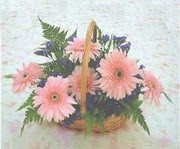 gerbera çiçeklerinde sepet   Denizli 14 şubat sevgililer günü çiçek