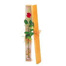 ince  kutuda  1  gül   Denizli 14 şubat sevgililer günü çiçek