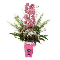 Denizli kaliteli taze ve ucuz çiçekler  cam yada mika vazo içerisinde tek dal orkide çiçegi
