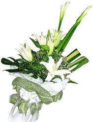 Denizli internetten çiçek siparişi  3 dal kazablanka çiçegi ve yesillikler