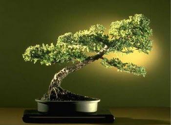 ithal bonsai saksi çiçegi  Denizli güvenli kaliteli hızlı çiçek