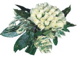 Denizli İnternetten çiçek siparişi  9 Beyaz gül Özel kisiler için