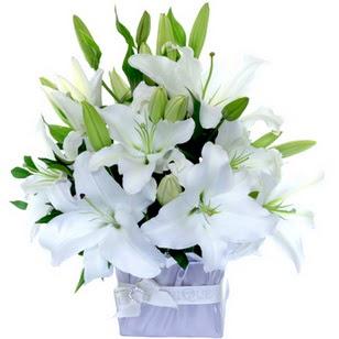 Denizli 14 şubat sevgililer günü çiçek  2 dal cazablanca vazo çiçeği