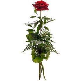 Denizli online çiçek gönderme sipariş  1 adet kırmızı gülden buket