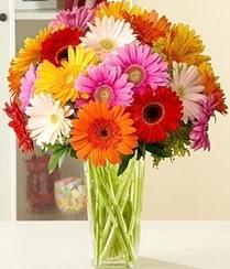 Denizli çiçek siparişi sitesi  15 adet gerbera çiçek vazosu