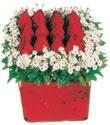 Denizli anneler günü çiçek yolla  Kare cam yada mika içinde kirmizi güller - anneler günü seçimi özel çiçek