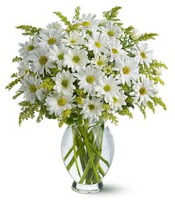 Vazo içerisinde beyaz krizantem çiçekleri  Denizli güvenli kaliteli hızlı çiçek
