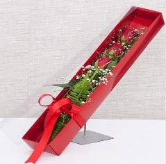 Kutu içerisinde 3 adet kırmızı gül  Denizli çiçek yolla