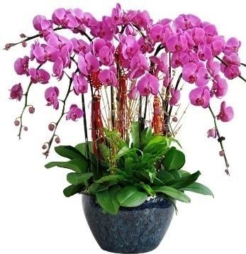 9 dallı mor orkide  Denizli çiçek , çiçekçi , çiçekçilik