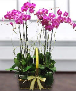 4 dallı mor orkide  Denizli internetten çiçek siparişi