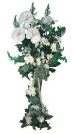 Denizli internetten çiçek satışı  antoryumlarin büyüsü özel