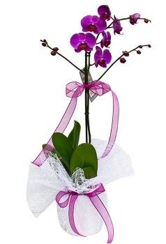 Tek dallı mor orkide  Denizli hediye sevgilime hediye çiçek