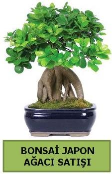 Bonsai japon ağacı satışı  Denizli çiçek online çiçek siparişi