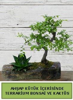 Ahşap kütük bonsai kaktüs teraryum  Denizli İnternetten çiçek siparişi