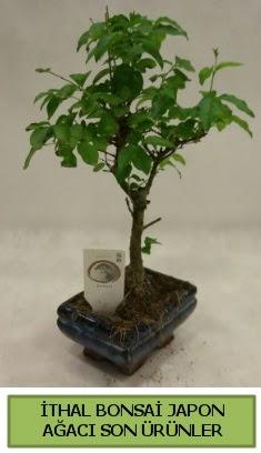 İthal bonsai japon ağacı bitkisi  Denizli hediye çiçek yolla