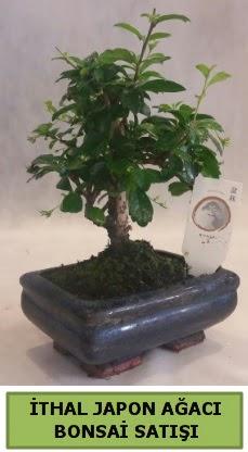 İthal japon ağacı bonsai bitkisi satışı  Denizli hediye sevgilime hediye çiçek