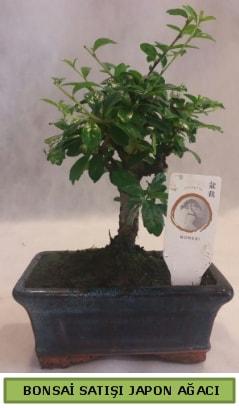 Minyatür bonsai ağacı satışı  Denizli anneler günü çiçek yolla