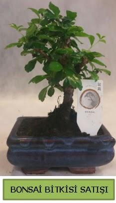 Bonsai ithal görsel minyatür japon ağacı  Denizli çiçek mağazası , çiçekçi adresleri