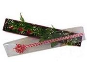 Denizli kaliteli taze ve ucuz çiçekler  3 adet gül.kutu yaldizlidir.