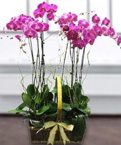 7 dallı mor lila orkide  Denizli uluslararası çiçek gönderme