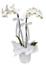 2 dallı beyaz orkide  Denizli internetten çiçek siparişi