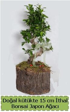 Doğal kütükte İthal bonsai japon ağacı  Denizli anneler günü çiçek yolla