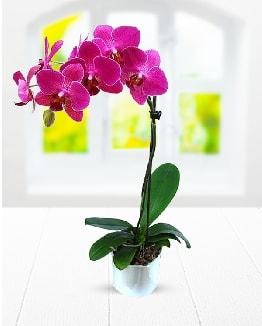 Tek dallı mor orkide  Denizli çiçek online çiçek siparişi