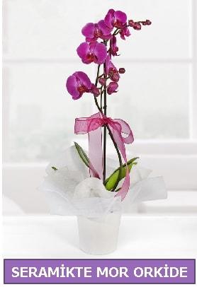 Seramik içerisinde birinci kalite tek dallı mor orkide  Denizli cicekciler , cicek siparisi