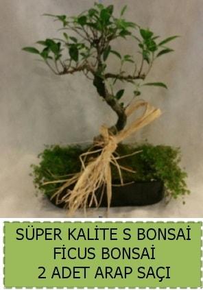 Ficus S Bonsai ve arap saçı  Denizli hediye sevgilime hediye çiçek