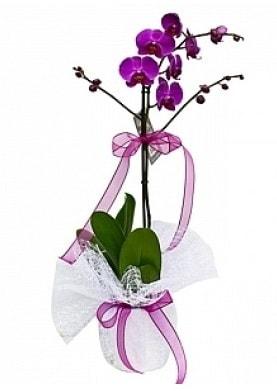 Tekli Mor Orkide  Denizli 14 şubat sevgililer günü çiçek