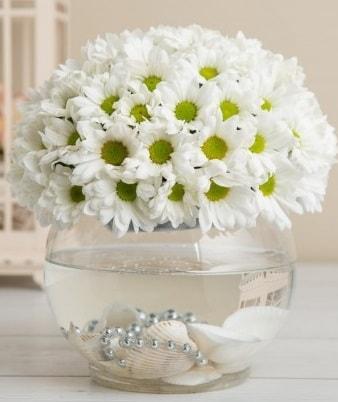 Fanusta beyaz Papatya  Denizli çiçek online çiçek siparişi