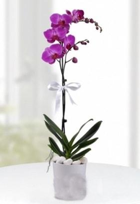 Tek dallı saksıda mor orkide çiçeği  Denizli çiçek yolla , çiçek gönder , çiçekçi