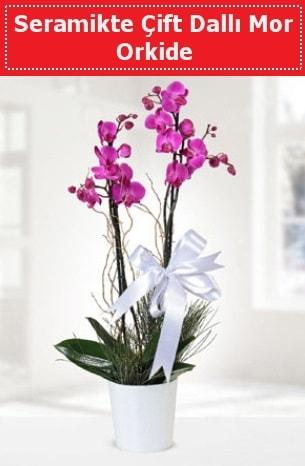 Seramikte Çift Dallı Mor Orkide  Denizli ucuz çiçek gönder