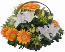 Denizli online çiçek gönderme sipariş  sepet modeli Gerbera kazablanka sepet